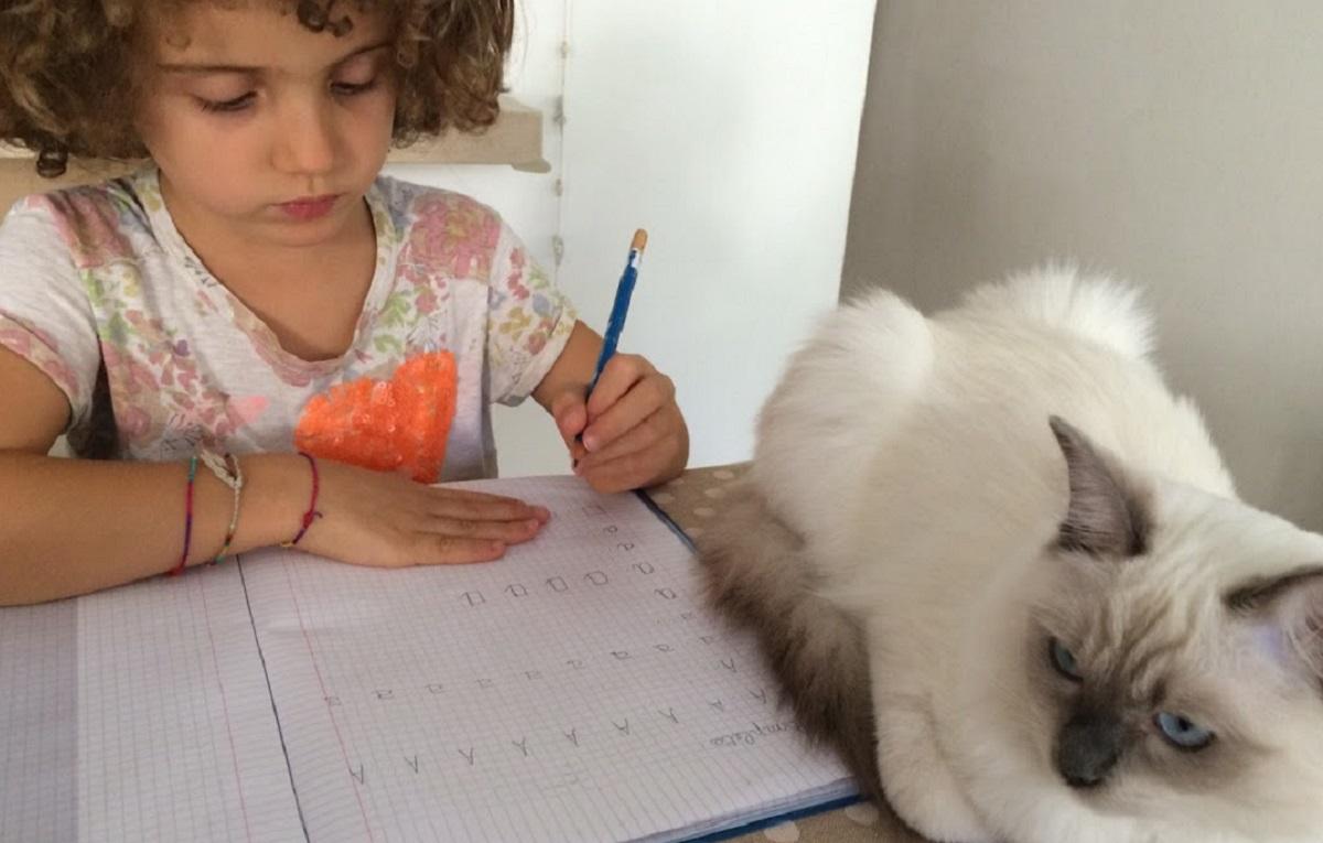 bambina fa i compiti accanto a ragdoll