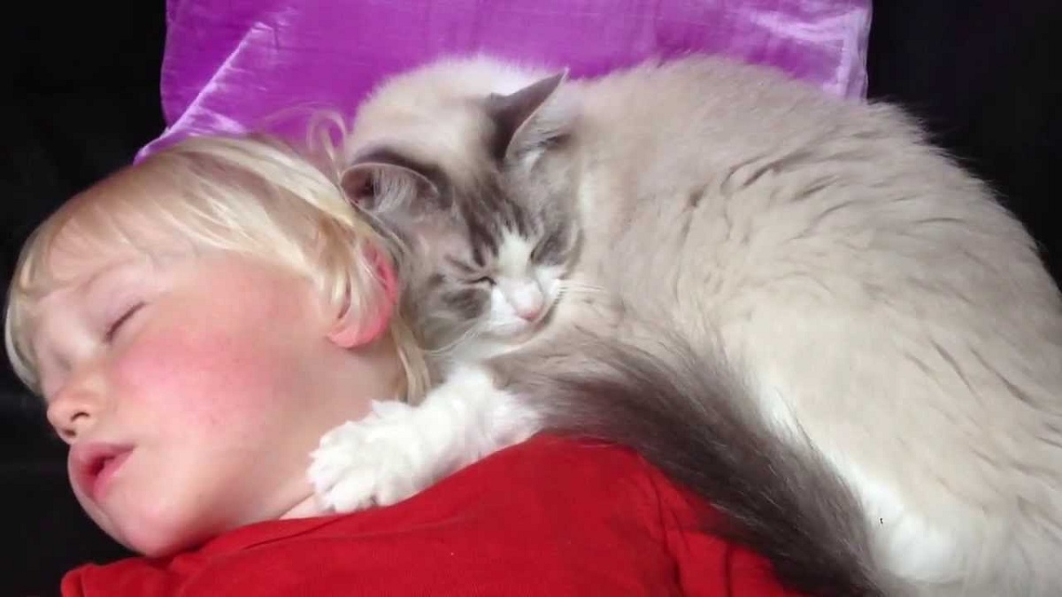 bambina dorme con accanto un ragdoll