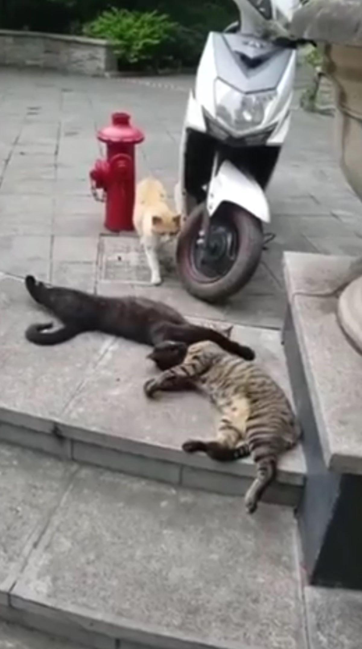 gatti-che-si-abbracciano