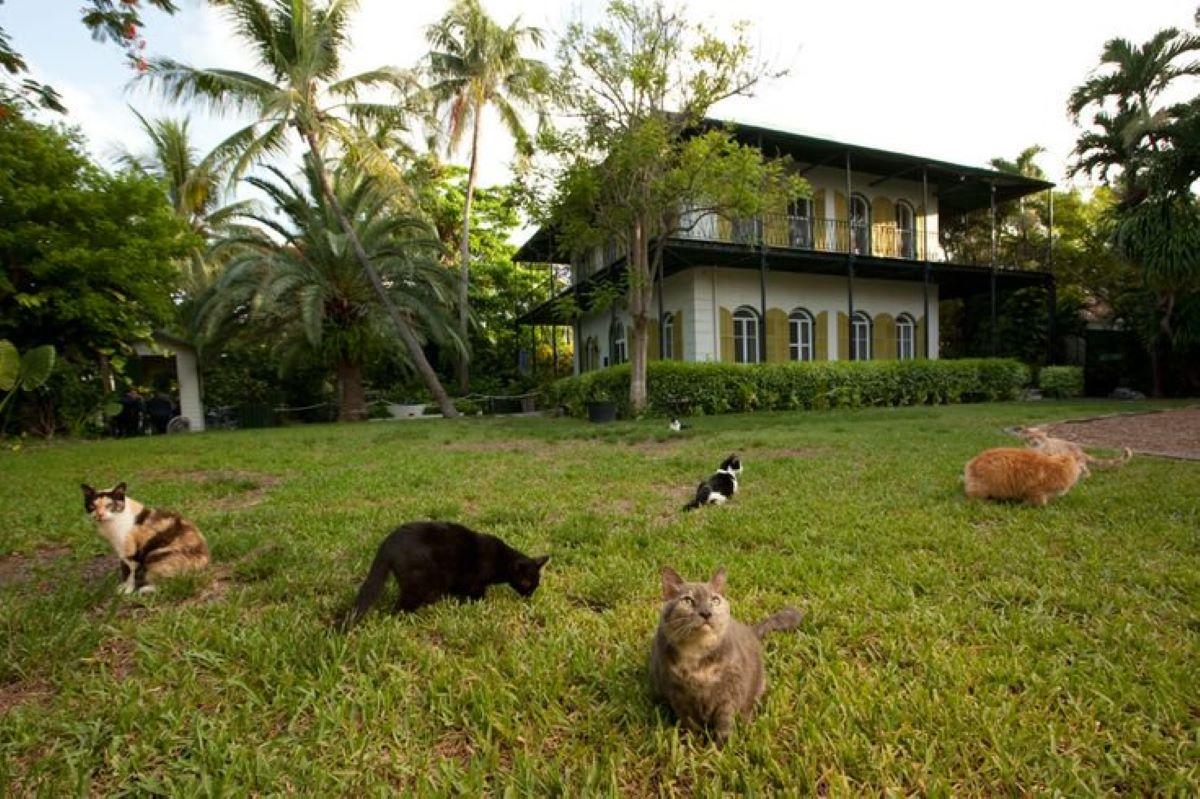 casa-con-molti-gatti