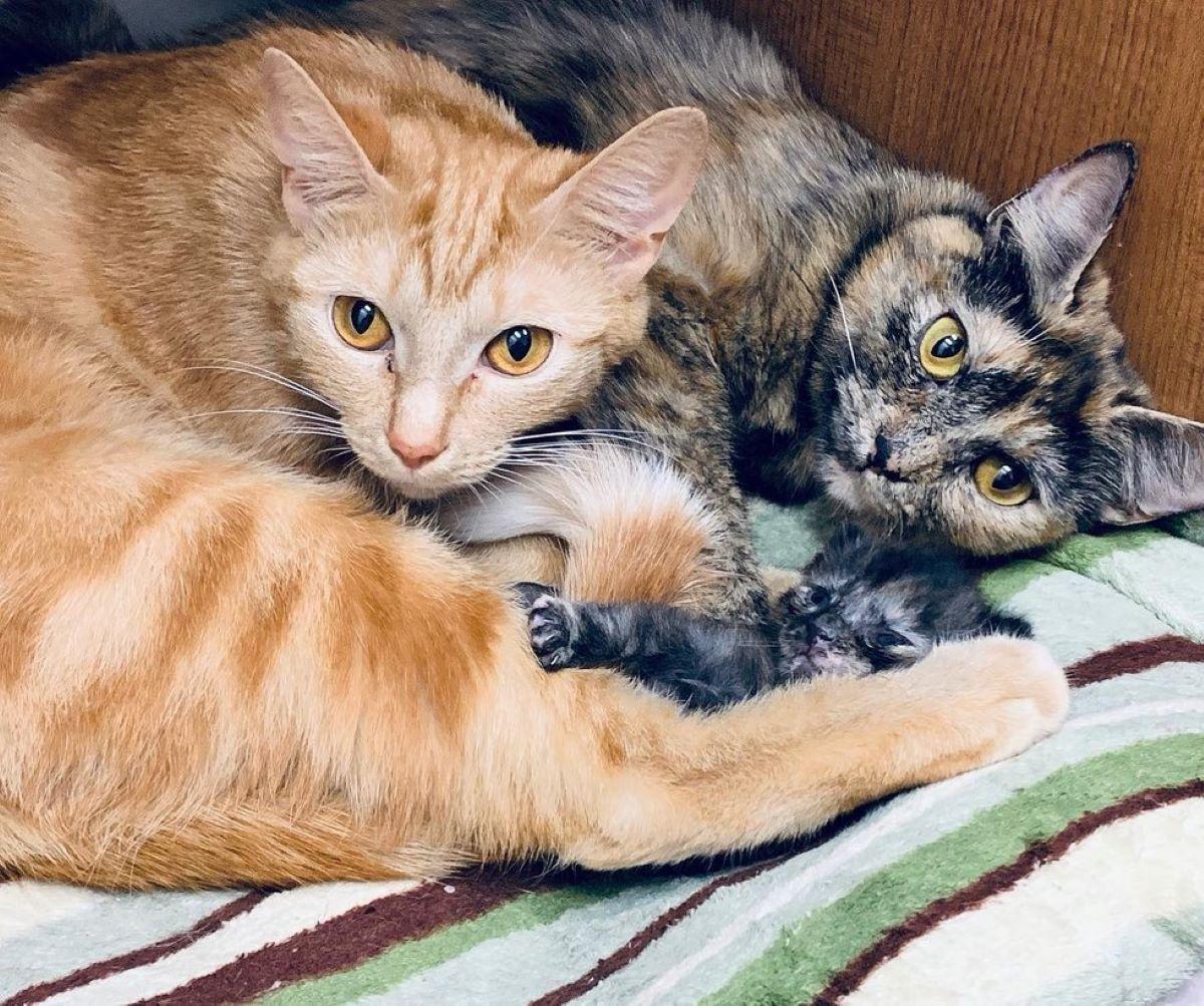 due-gatti-con-cuccioli
