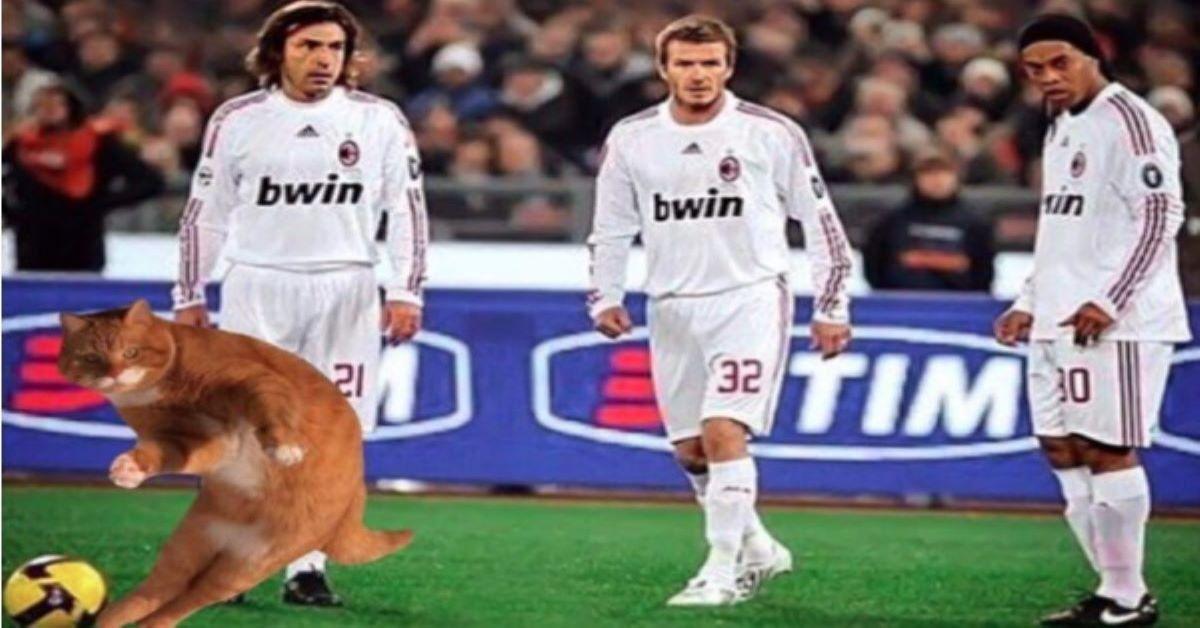 gatto-con-calciatori-importanti