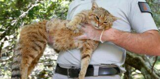 gatto-in-braccio-a-uomo-in-divisa