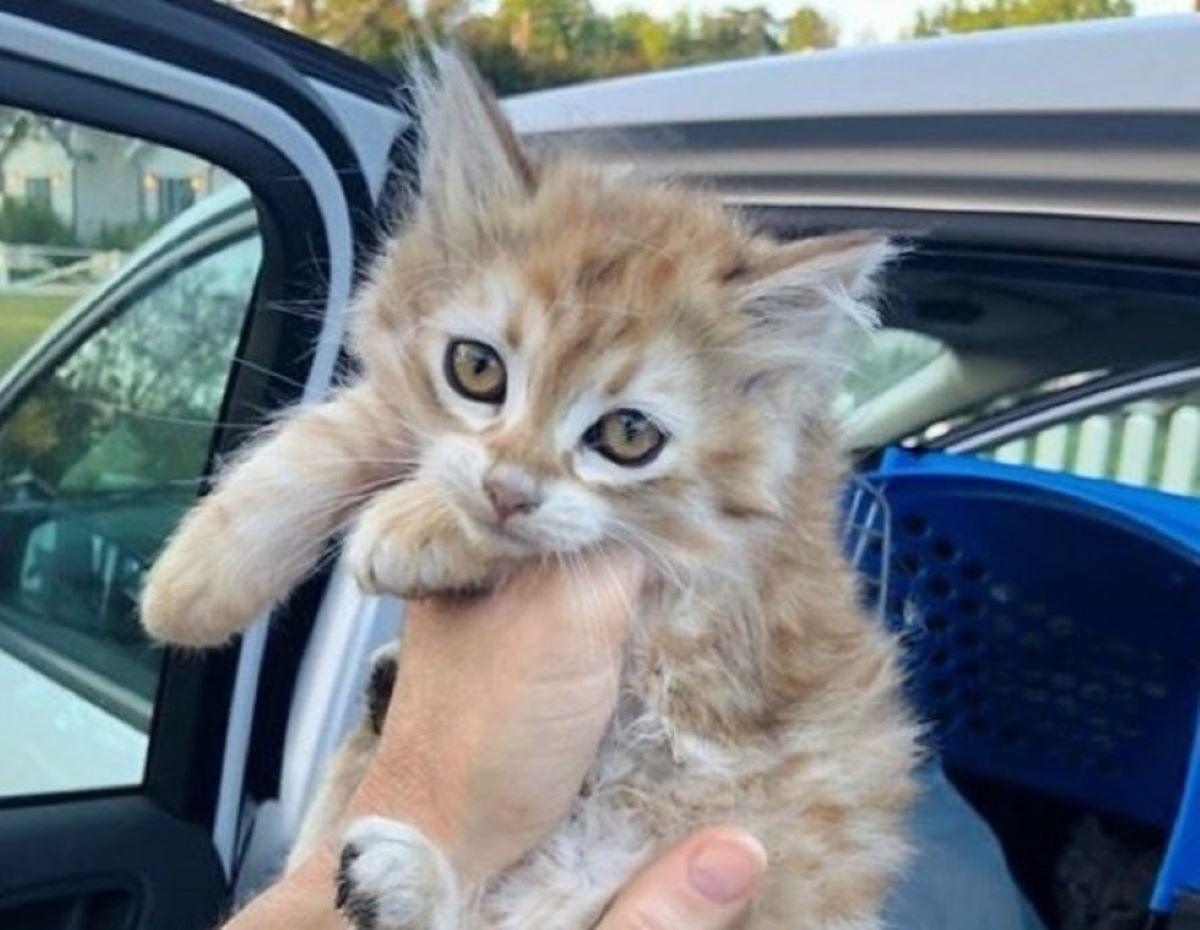 gatto-con-occhi-dolci