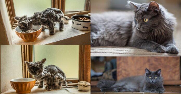 gattino-e-gatto-adulto