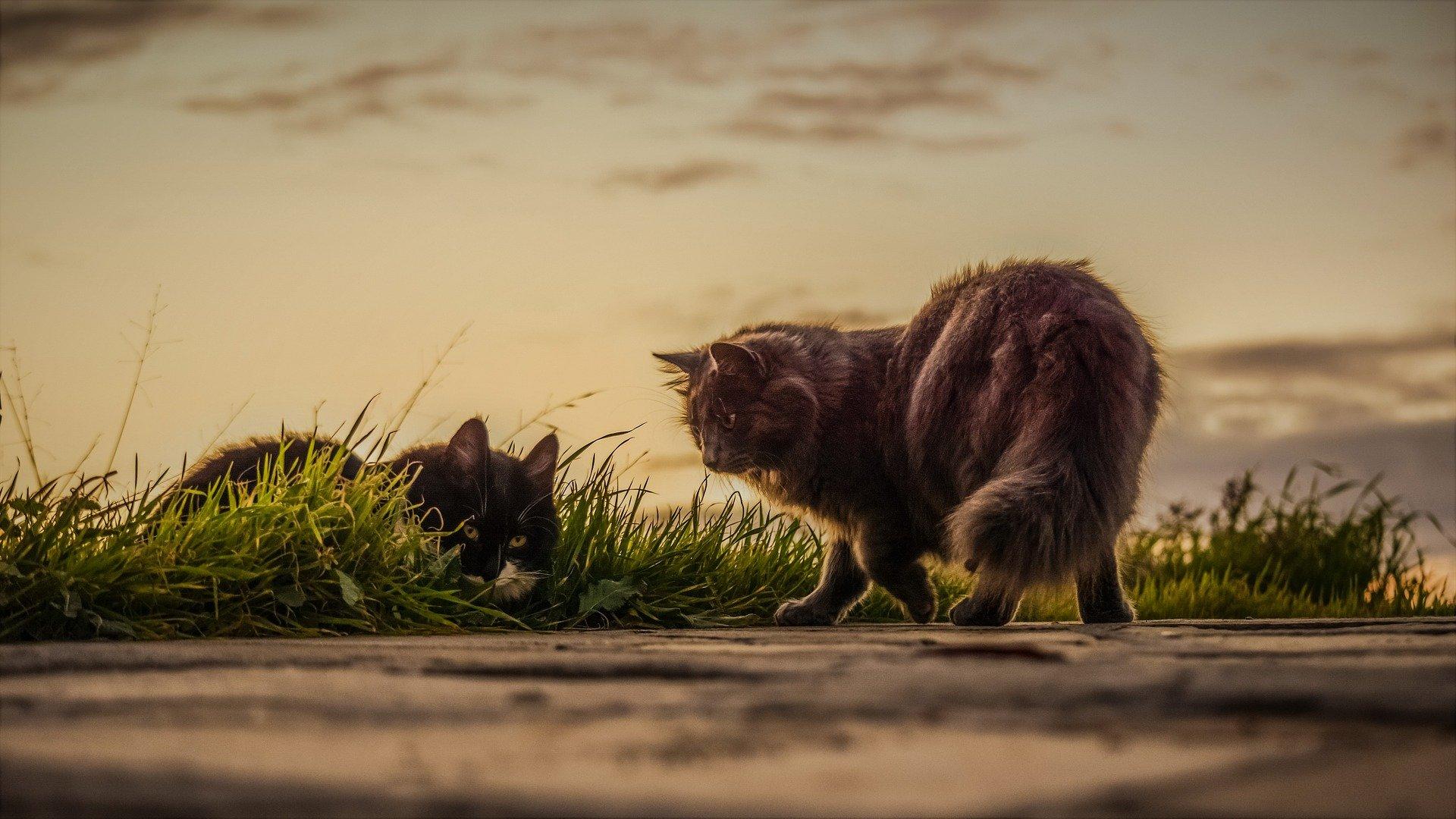 Gatti che esplorano