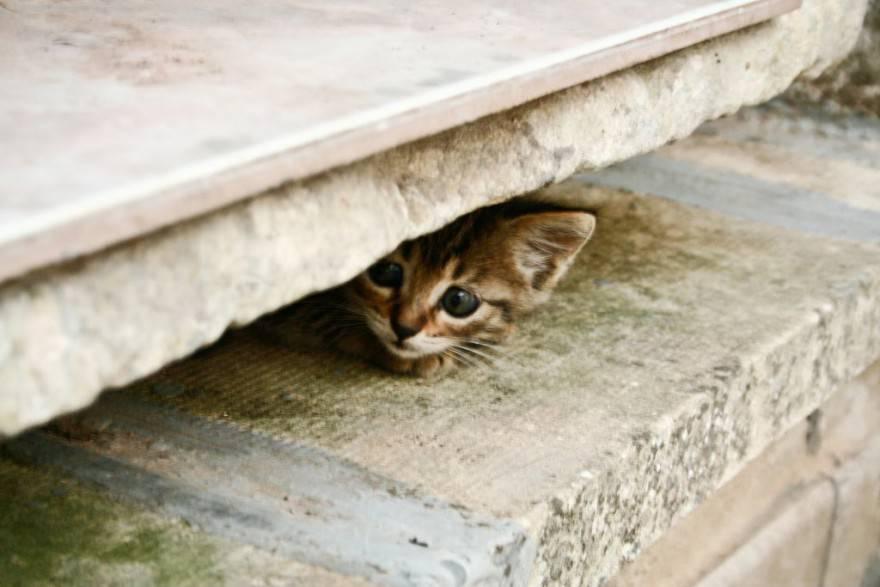 Gattino che si nasconde
