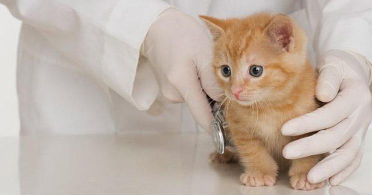 Gattino visitato dal veterinario