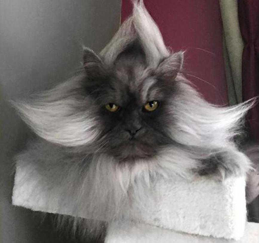Gatto Juno