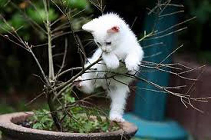 Gatto arrampicato su una pianta