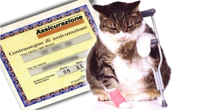 Gatto assicurato