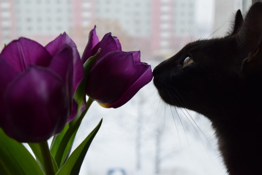 Gatto che annusa un fiore