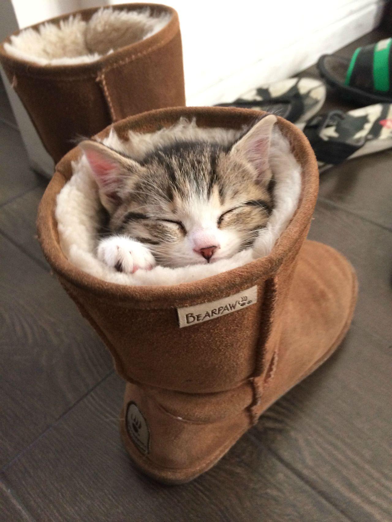Gatto che dorme in uno stivale