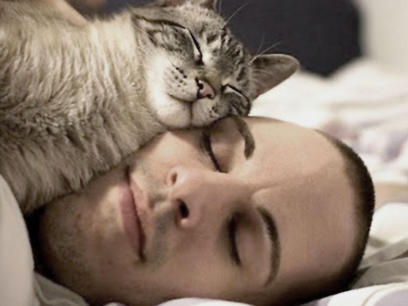 Gatto che dorme sulla testa del padrone