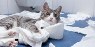Gatto che gioca con la carta igienica