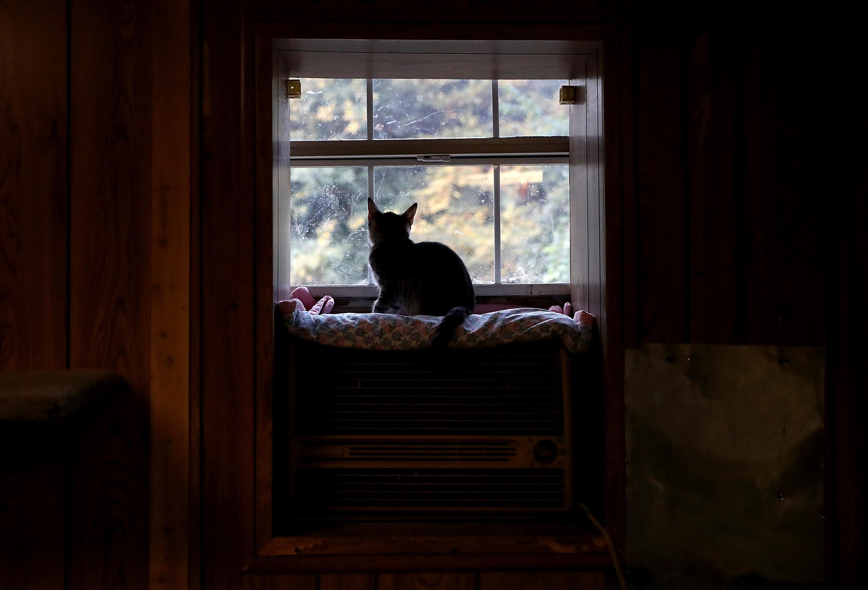 Gatto che guarda fuori da una finestra