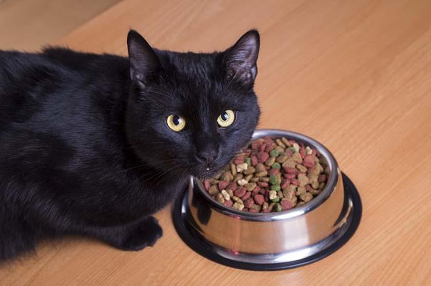 Gatto che mangia i croccantini