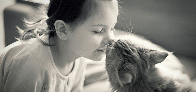 Gatto che si fa baciare da una bambina