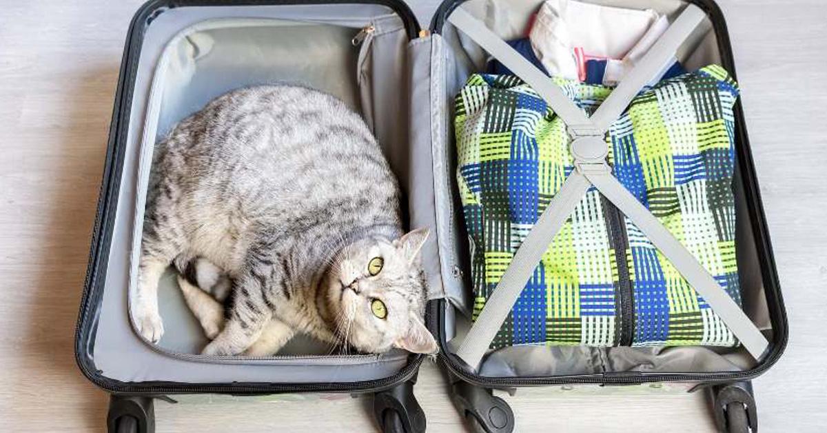 Gatto dentro una valigia