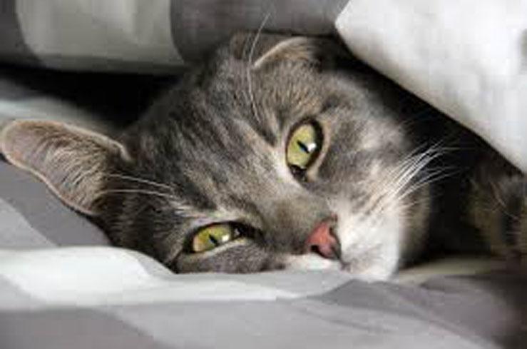 Gatto nel letto