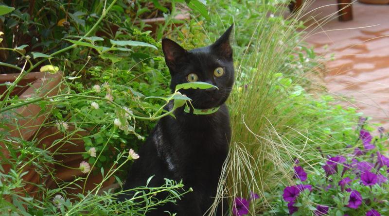Gatto nero tra il verde