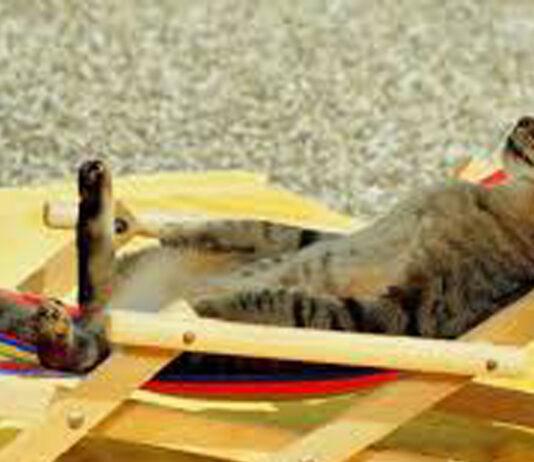 Gatto sdraiato su una sdraio
