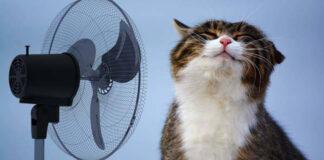 Gatto vicino ad un ventilatore