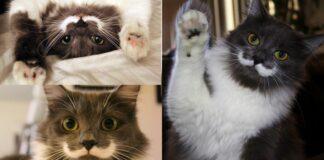 gatto-con-i-baffi