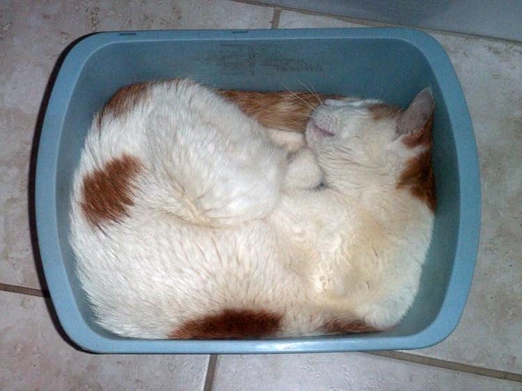 Il gatto dorme nella lettiera
