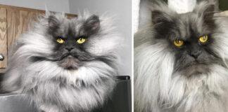 Il gatto juno