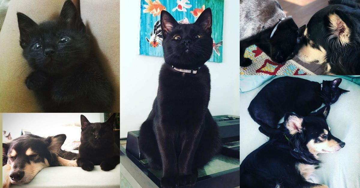 gatto-nero-con-cane