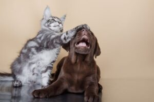 Gatto adulto con cane cucciolo