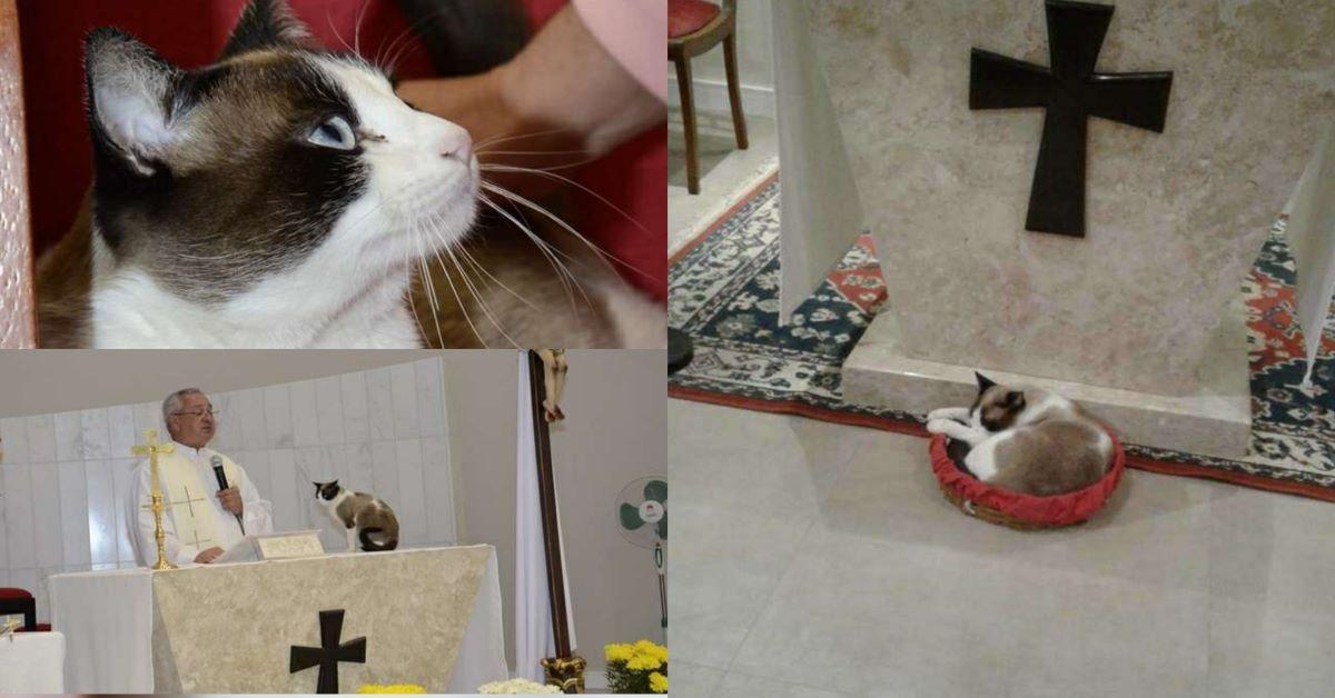 gatto-su-altare