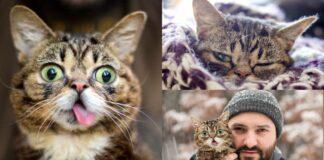 gatto-con-lingua-di-fuori