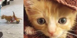 Mac il gattino paralizzato