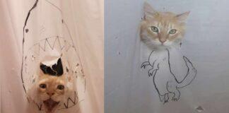 gatto-con-tende