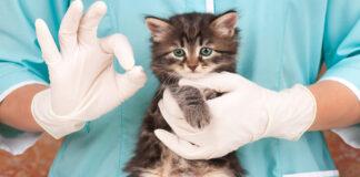 Un cucciolo di gatto dal veterinario