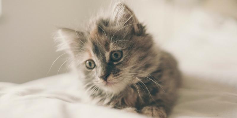 Un gattino tigrato che osserva