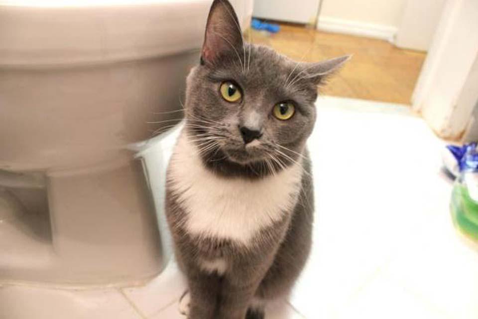 Un gatto in bagno