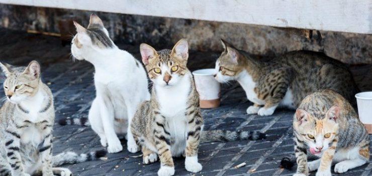Una colonia di gatti randagi
