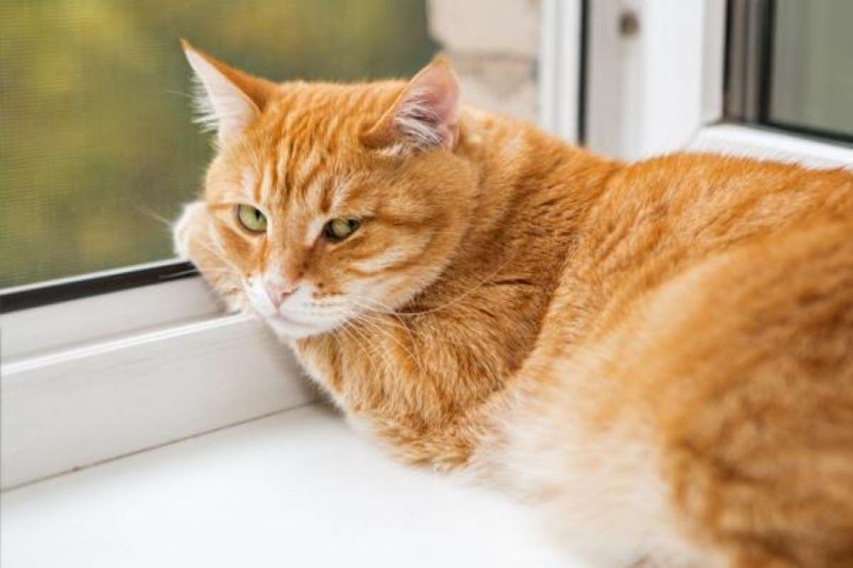 gatto-alla-finestra