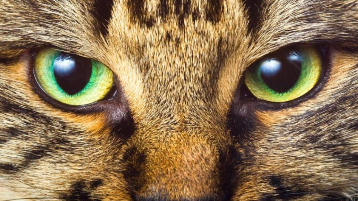 occhio-gatto