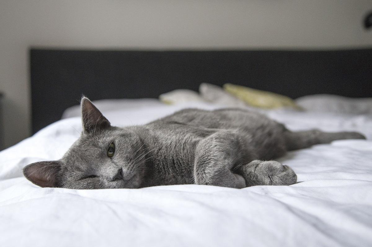 blu di russia sul letto