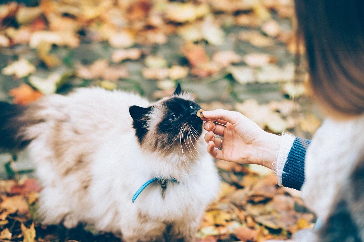 gatto annusa croccantino