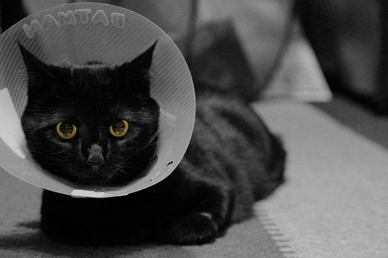 collare di elisabetta per gatti