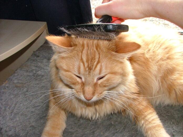 Spazzole per gatti: le migliori tra cui scegliere