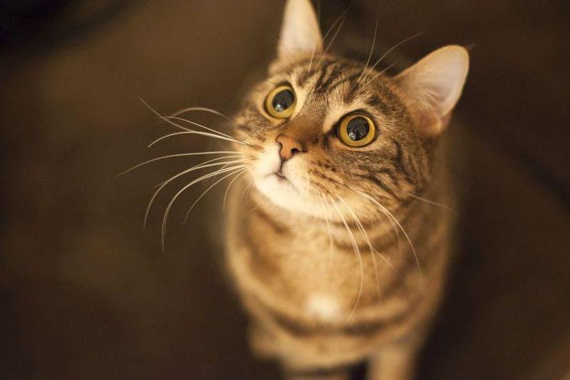 Gesti affettuosi del gatto