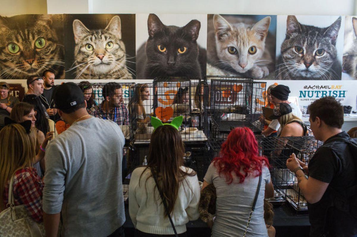 gatti-e-tante-persone