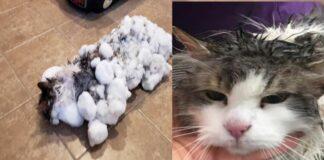 gatto-con-ghiaccio