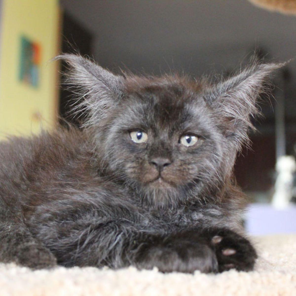 gatto-con-occhi-espressivi
